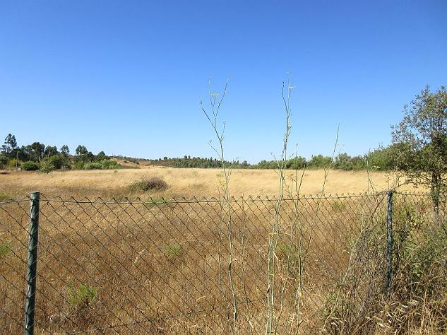 land with ruin for sale, central Algarve