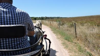 carriage ride Algarve eco tourism